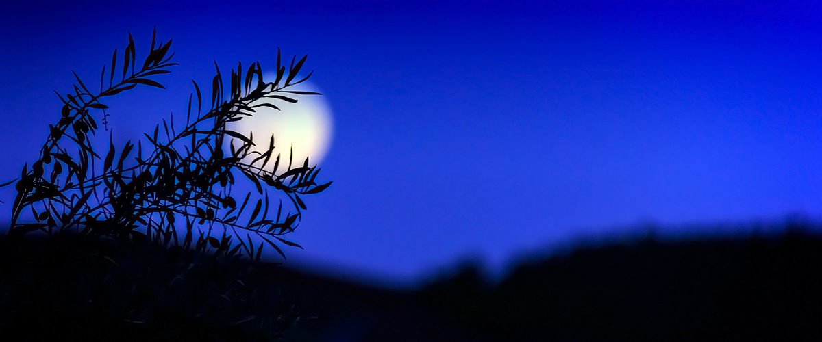 The olive tree and the moon