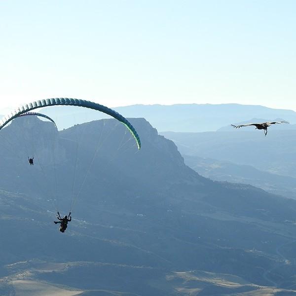 Activities 12 Parahawking